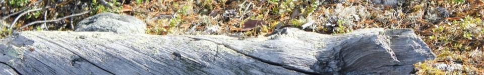 Etelä-Kuusamon Erämiehet r.y